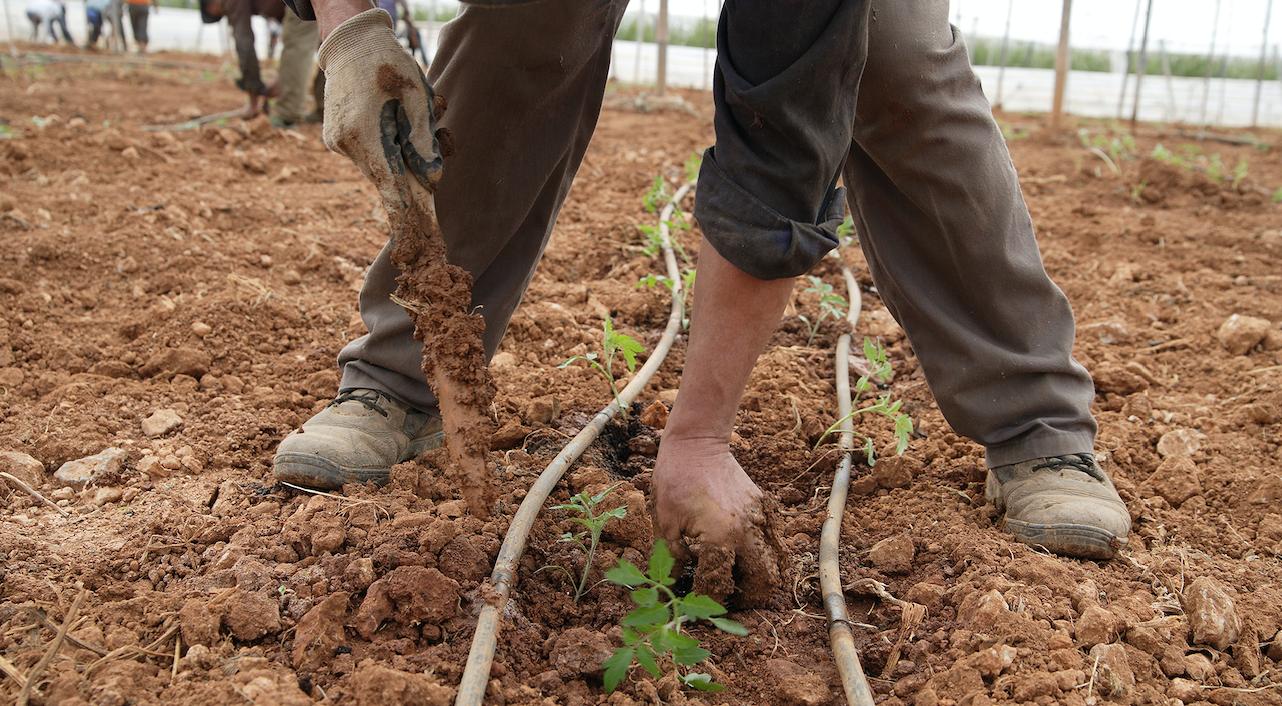 cultivos agromallorca